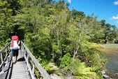 Tramping in Abel Tasman national park, New Zealand — Stock Photo