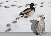 Cat and duck — Stock Photo