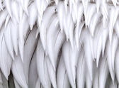 Close-up on white feathers — Stock Photo