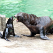 Sea lions playing - Foto Stock