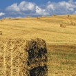Haystack on a filed — Stock Photo