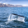 A humpback whale — Stock Photo
