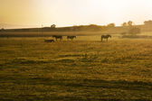 Horses in morning — Stock Photo