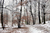 Winter in the forest — Stock fotografie