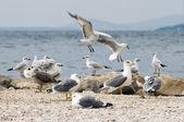 Sea gulls on beach — Stock Photo