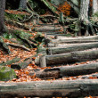 Stock Photo: A wood stairs in forest