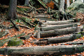 A wood stairs in forest — Stock fotografie