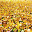 Fall/ autumn leaves - Stock Photo