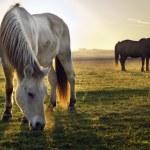 Horses in morning fog — Stock Photo