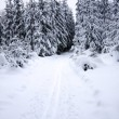 Stock Photo: Snowy forest and cross-country ski trail