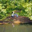 White-naped Crane - Stok fotoraf