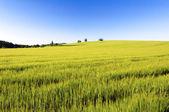 Wiosną pola — Zdjęcie stockowe