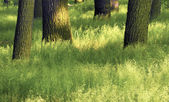 Grass and trunk — Stock Photo