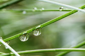 Two water drops on the grass — Stock Photo