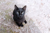 A black cat — Foto de Stock