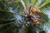 Looking to the crown of palm — Stock Photo
