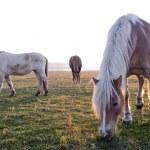 Horses — Stock Photo #18876533