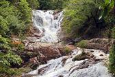 A waterfall — Stock Photo