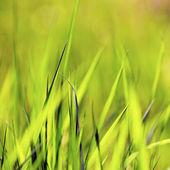 Green spring grass — Stock Photo