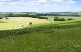 Paesaggio agricolo di estate — Foto Stock