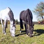 Horses — Stock Photo #23872599