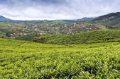 Tea Tree Field and vegetable gardens, Sri Lanka — Stock Photo