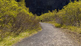 Path in park. — Stock Photo