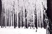 Vintern skog — Stockfoto
