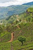 Mountainous terrain of Sri Lanka — Stock Photo