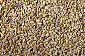 Dried fenugreek seeds — 图库照片