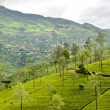 Mountainous terrain of Sri Lanka — Stock Photo