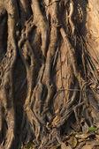 корни и ствол дерева — Стоковое фото