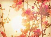 Anemone Japonica — Stock Photo