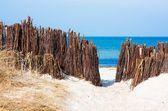 Pathway to the beach — Stock Photo