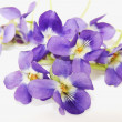 Stock Photo: Posy violets