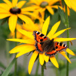 Stock Photo: Tortoiseshell butterfly on yellow flower