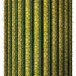 Saguaro Cactus — Stock Photo
