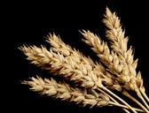 Wheat on Black — Stock Photo