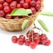 Cherries in a basket — Stock Photo #13320893