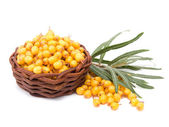 Basket with sea-buckthorn berries — Stock Photo