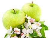 Jablka a květ květ — Stock fotografie