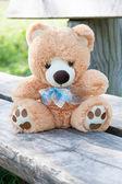Teddy bear on the bench — Stockfoto