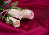 Roses on satin background — Stock Photo