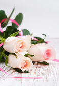 Růžové růže — Stock fotografie