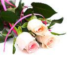 Beyaz üzerine pembe güller — Stok fotoğraf