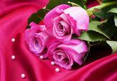 Rosen auf satin hintergrund — Stockfoto