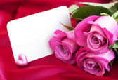 Blank card for your message and pink roses — Stock Photo