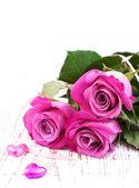Rosas cor de rosa — Foto Stock