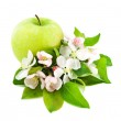 Apple and Flower Blossom — Stock Photo #19046459
