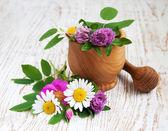 Wilde bloemen en kruiden — Stockfoto